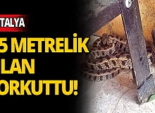 Antalya'da 1,5 metrelik engerek yılanını plastik kovayla yakaladı
