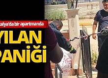 Antalya'da apartmandaki yılan korku dolu anlar yaşattı