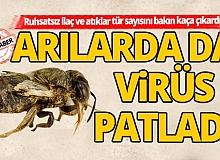 Arılarda da virüs patladı!