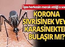 Böceklerden korona virüs geçer mi?