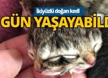 İki yüzle doğan yavru kedi hayata 3 gün tutunabildi