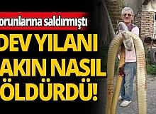 Torunlarına saldıran dev yılanı bakın nasıl öldürdü!