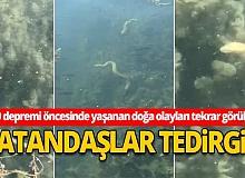 İznik Gölü'nde aynı bölgede çok sayıda yılanın su yüzüne çıktı