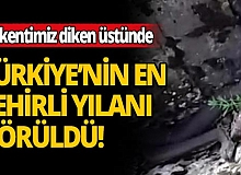 Türkiye'nin zehri en ölümcül ve en büyük yılanı görüntülendi