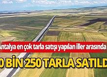Antalya'da yılın ilk 6 ayında 10 bin 250 tarla satıldı