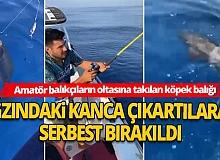 Antalya Haber: Amatör balıkçıların oltasına köpek balığı takıldı!