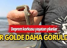 Deprem korkusu yaşatan yılanlar bir gölde daha görüldü