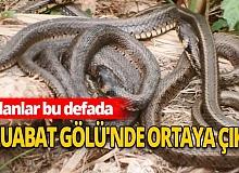 İznik Gölü'nün ardından yılanların Uluabat Gölü'nde görülmesi vatandaşları tedirgin etti