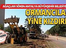 Ormancılar Büyükşehir Belediyesi'ne öfkeli