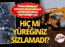 Finike Belediyesi kamyon ve iş makinesi caretta yuvalarını darmadağın etti