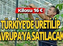 Antalya haber: Alanya' da yetişecek, tüm Avrupa'ya satılacak