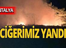Antalya haber: Katran Dağı yandı!