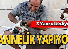Antalya haber: Max, üç yavru kedinin süt annesi
