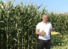Antalya haber: Muratpaşa'dan mısır hasadı