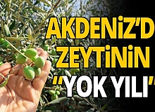 Antalya haber: Zeytinde düşüş bekleniyor