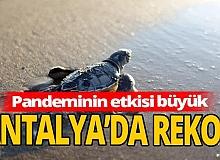 Antalya sahillerinde tarihi rekor