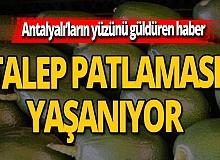 Bakan Çavuşoğlu gündeme taşıdı, talep arttı