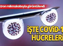 Çarpıcı koronavirüs araştırması!