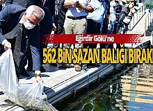 Eğirdir Gölü'ne 562 bin sazan balığı yavrusu bırakıldı