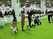 Evcil hayvanlar ürünü fuarı  Antalya'da