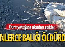 Kontrolsüz atılan atıklar binlerce balığı öldürdü