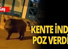 Yaban domuzları kente indi