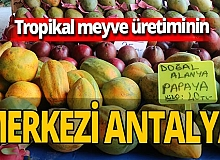 Alanya ve Gazipaşa tropikal meyve üretim merkezi oldu