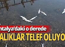 Antalya'da yüzlerce balık telef oldu