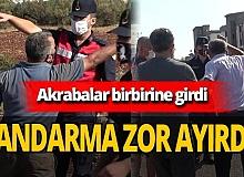 Antalya'da zeytin ağaçları kesildi, akrabalar birbirine girdi