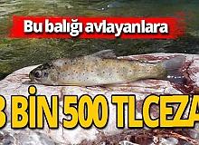 Antalya haber: 'Alakır alası' avlayanlara 3 bin 500 TL ceza kesildi