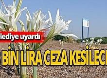 Antalya haber: İşte kum zambağını koparmanın cezası!