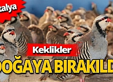 Antalya haber: Kınalı keklikler doğayla buluştu