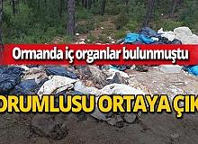 Antalya haber: Ormanda iç organlar bulunmuştu! Olayla ilgili flaş gelişme