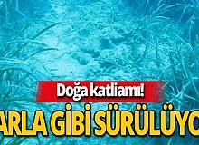 Antalya haber: 'Posidonia' çayırları tehlike altında