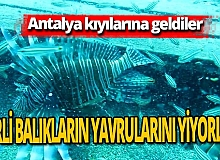 """Antalya haber: Prof. Dr. Mehmet Gökoğlu açıkladı: """"Doğu Akdeniz tropikalleşmeye başladı"""""""