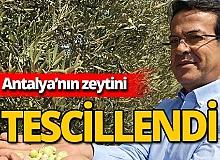 Antalya'nın 'Beylik zeytin'i tescillendi