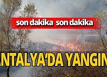 Antalya son dakika... Kaş'ta ormanlık alanda yangın çıktı