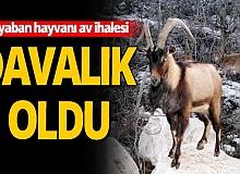 Antalya ve Isparta'daki yaban hayvanı av ihalesi mahkemelik oldu