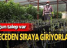 Antalya haber: Avokado fidanı için geceden sıraya giriyorlar