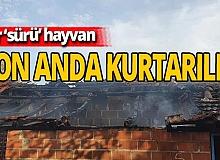 Hayvanlar yangından  son anda kurtarıldı