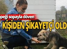 Köpeği sopayla döven kişi hakkında şikayetçi oldu