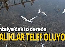 Yüzlerce balık telef oldu
