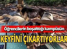 Akdeniz Üniversitesi'nin keyfini kedi ve köpekler çıkartıyor