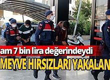 Antalya'da avokado hırsızları yakalandı!