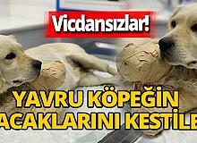 Samsun'da 'Pamuk' adlı köpeği vurarak yaraladıktan sonra bacaklarını  kestiler