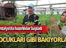 Serik'te domates üreticileri ürünlerini soğuktan korumak için hazırlıklara başladı
