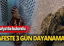 Antalya'da kafese konulan çulluk 3 günde öldü