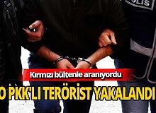 Interpol her yerde arıyordu! Şanlıurfa'da yakalandı