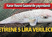 Resmi Gazete'de yayımlandı! Balon balığı için yeni karar