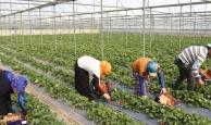 Çiftçiler fiyatı eleştirdi